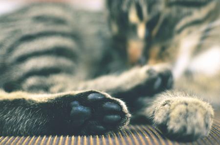 tired eyes: Grey cat lying on chair