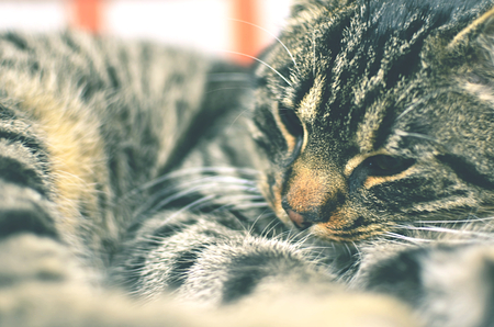 grey cat: Grey cat lying on chair