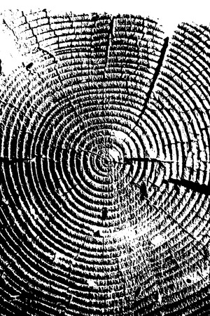 lumber: Wooden grungy background texture in black and white