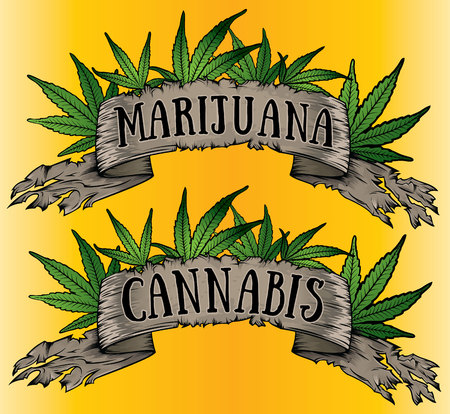 cannabis sativa: marijuana leaves design with old parchment Illustration