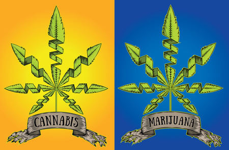 indica: Marijuna Cannabis design stamp with paper parchment Illustration