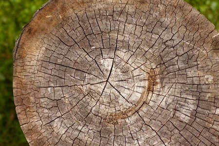 tree stump wooden texture surface close up