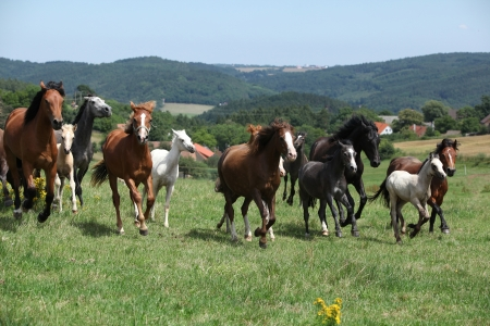 herd: Herd of running horses on pasturage with some trees on the backround Stock Photo
