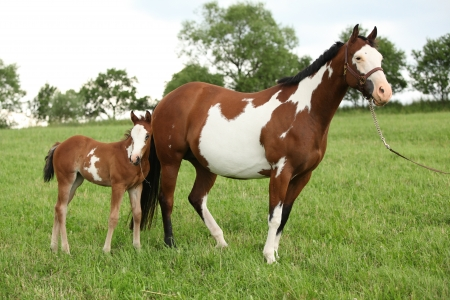 filly: Nice Paint horse mare with filly i summer