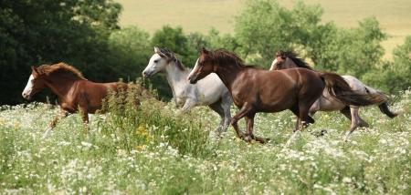 Partij van de paarden die in bloemrijke scene in het voorjaar