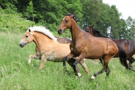 batch: Batch of horses running on pasturage Stock Photo