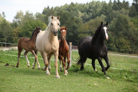 Mares with foals running together on pasturage Stockfoto