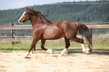 Beautiful stalion with long mane running on the sand Stock Photo