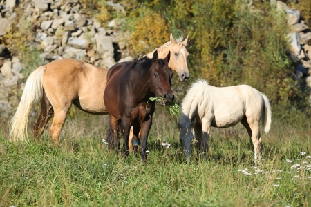 batch: Batch of horses standing on autumn pasturage Stock Photo