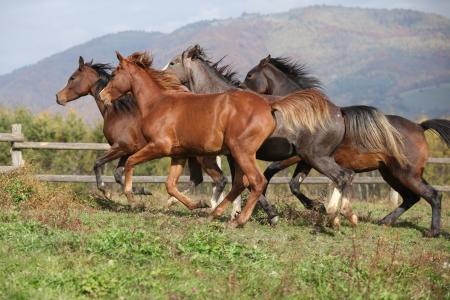 Gruppe von Pferden zusammen auf Herbst Weide laufen