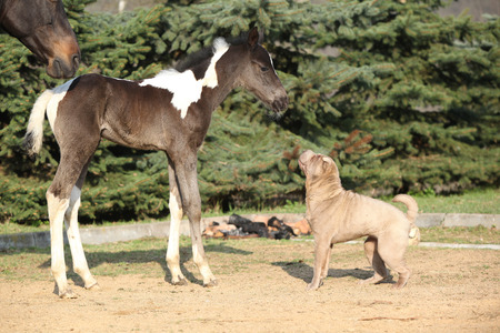 Nice young dog playing with foal outside photo
