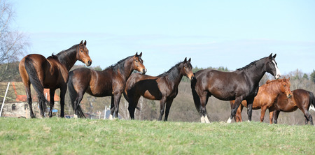 batch: Batch of horses standing together on pasturage