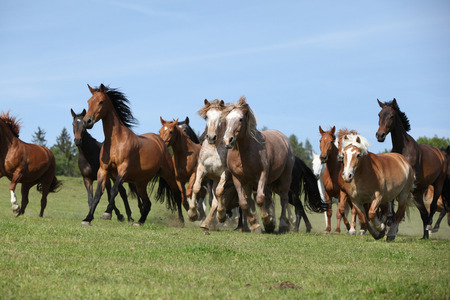 batch: Very various batch of horses running on pasturage in spring