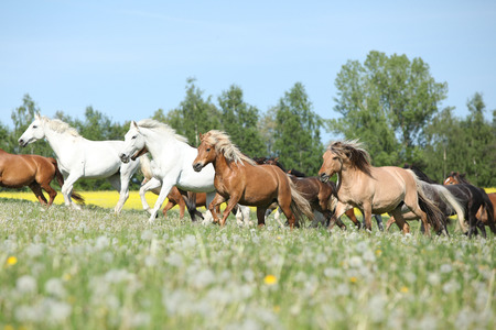 batch: Muy diferentes lotes de caballos que se ejecutan en los pastos en primavera