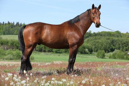 Verbazingwekkende bruin paard staat in bloei de natuur Stockfoto