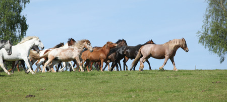 Very various barch of horses running together on pasturage