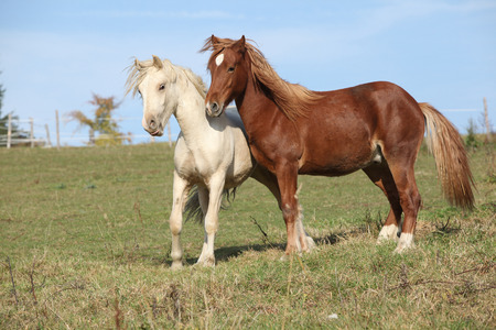 pasturage: Two young stallions playing together on pasturage Stock Photo