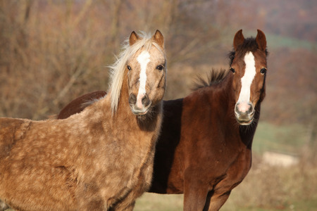 pasturage: Two horses standing together on pasturage and looking at you Stock Photo