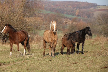 pasturage: Batch of horses standing on autumn pasturage together