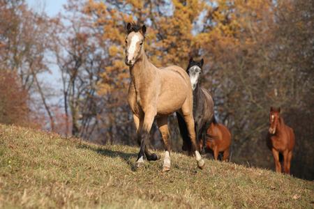 batch: Lote de caballos corriendo en oto�o juntos Foto de archivo