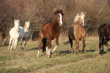 batch: Batch of horses running in autumn together Stock Photo