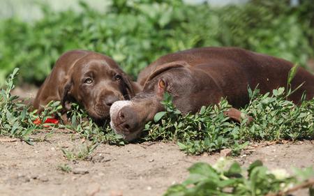 puta: Incre�ble perra jugando con sus cachorros en la naturaleza