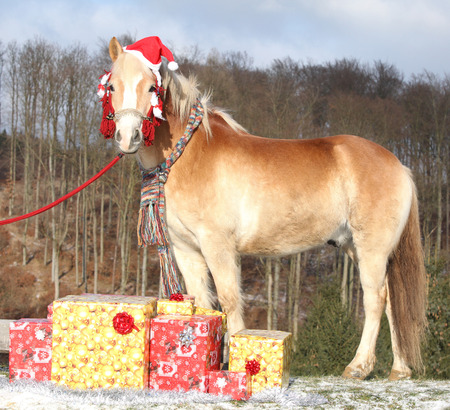 Amazing horse with christmas hat and gifts outside