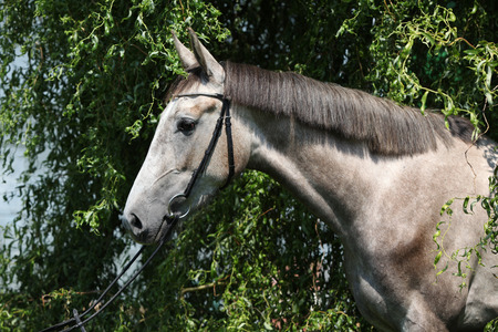 standing alone: Beautiful grey horse standing alone in nature Stock Photo