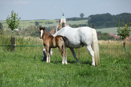 inaction: Beautiful mare with its foal standing together on pasturage
