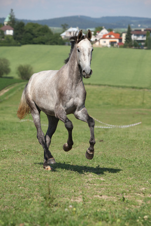 pasturage: Amazing young horse running alone on pasturage