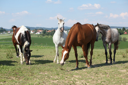 warmblood: Nice herd of horses beeing together on green pasturage Stock Photo