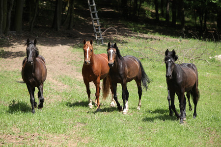 pasturage: Nice herd of horses beeing together on green pasturage Stock Photo