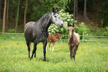 filly: Beautiful mare with its foal standing together on pasturage