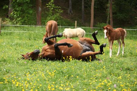 yegua: potro sorprendido mirando a rodar alrededor yegua en pasto Foto de archivo