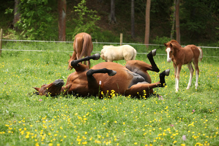 mare: Suprised foal looking at roll around mare on pasturage Stock Photo