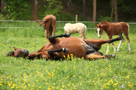 pasturage: Suprised foal looking at roll around mare on pasturage Stock Photo