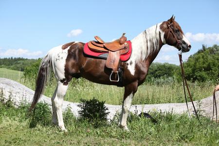 mane: Portait of beautiful paint horse stallion with long mane Stock Photo