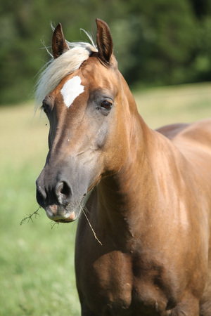 inaction: Nice horse with blond hair looking at you on pasturage