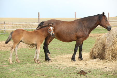 Nice mare with its foal on pasturage