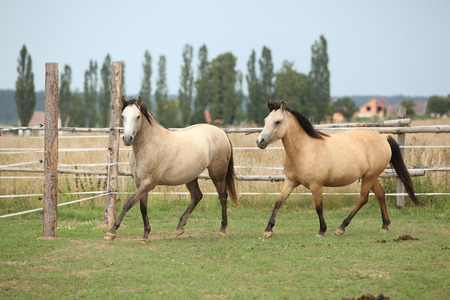 Two horses together on pasturage in summer