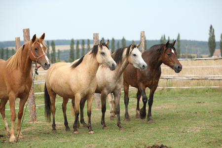 Beautiful horses together on pasturage in summer