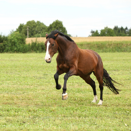 Beautiful brown horse jumping in freedom on the grass Banco de Imagens - 100508206