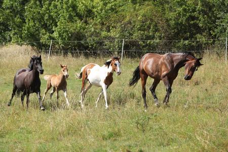 Amazing batch of horses moving on pasturage