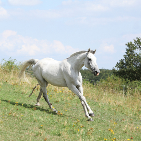Nice horse running on pasturage in summer