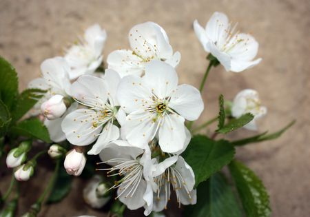 a photograph of white flowers Stock Photo
