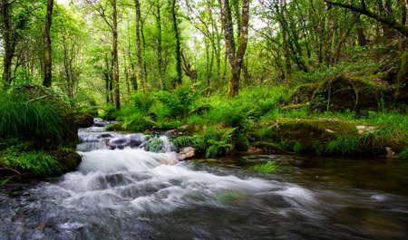 mountain stream bed rushing through lush green vegetation in springtime