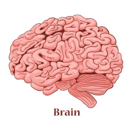 cerebro de dibujos animados aislado en un fondo blanco.