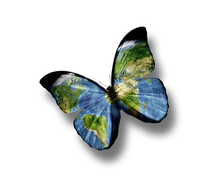 blue butterfly: butterfly with a world map on the wings isolated on white background Stock Photo