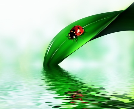 ladybug on a leaf of grass above the water Stock Photo - 8254151
