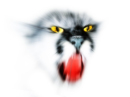 abstract face lynx isolated on a white background photo